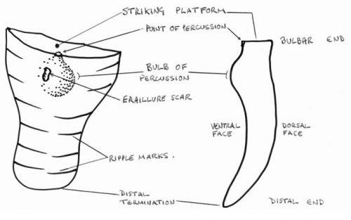 Identification of flint tools - ventral face diagram