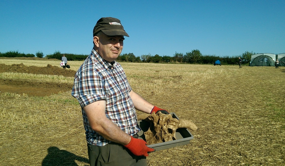 roman ox skull - nassington 2018
