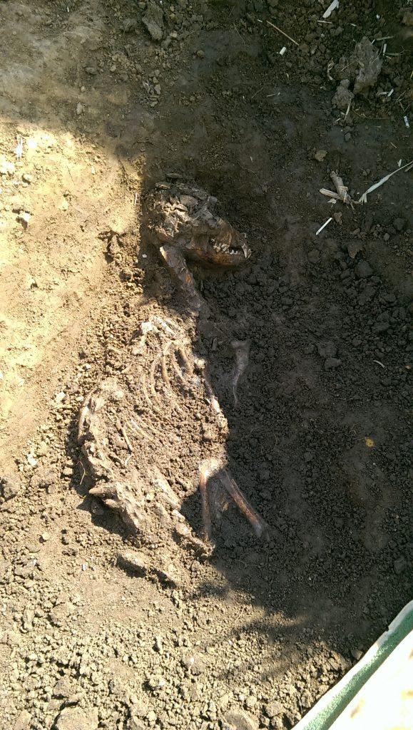 Roman dog at Nassington